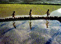 Running on Rice Terraces